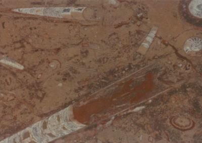 fossile-marrone