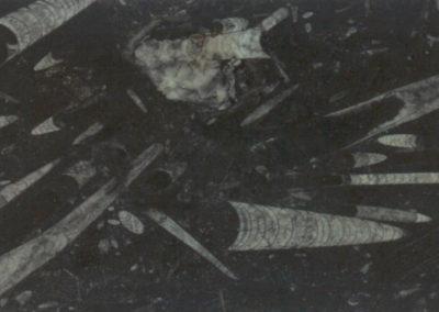 fossile-nero